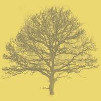arbre?jpg