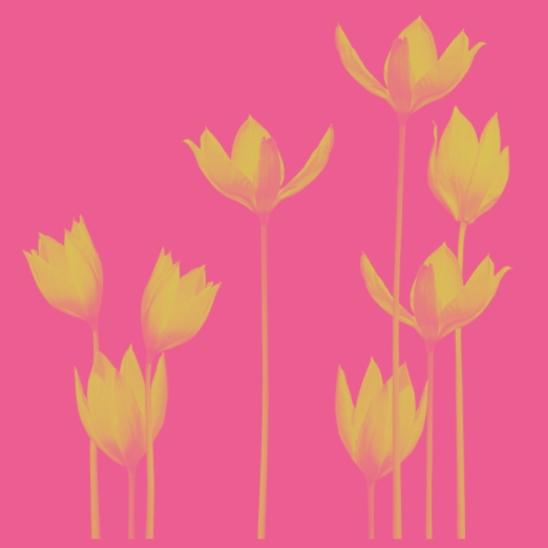 fleurs jaunes sur fond rose