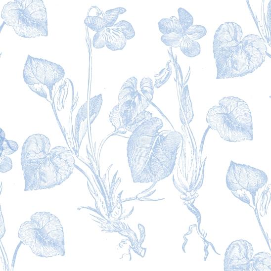blanc fleurs bleues