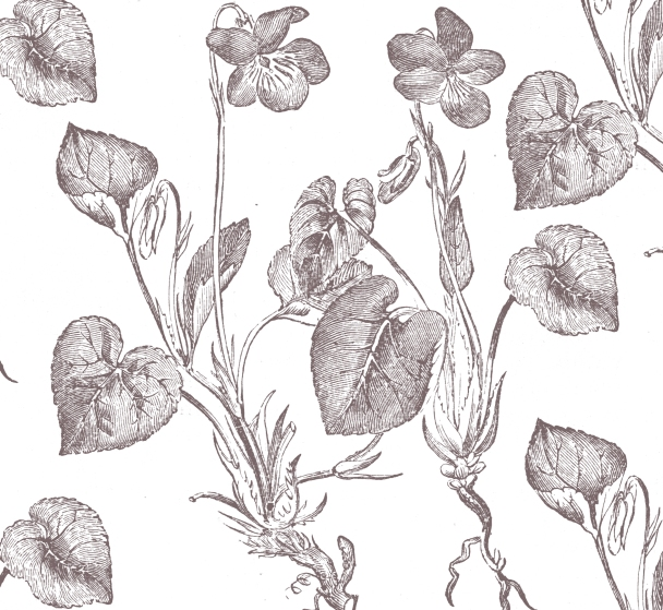 blanc fleurs brunes