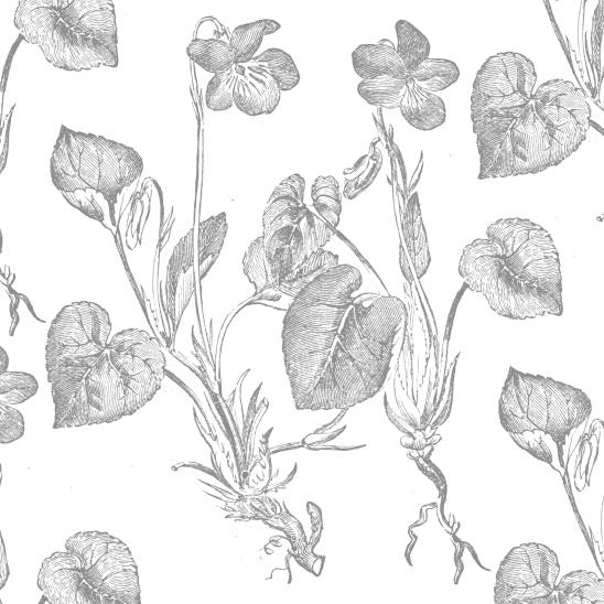blanc fleurs grises