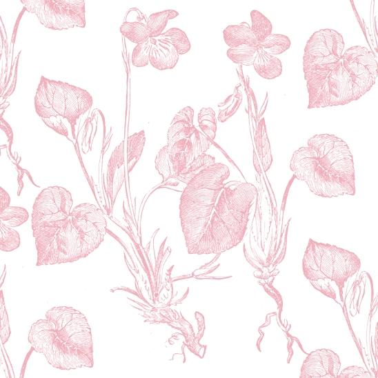 blanc fond rose