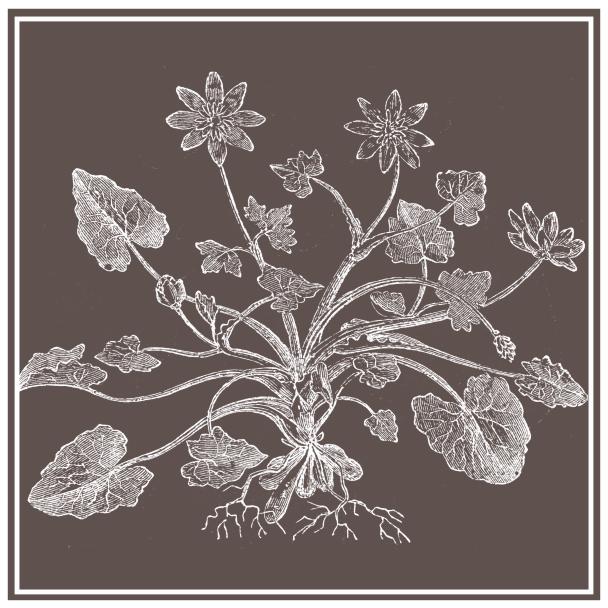 nature brun foncé
