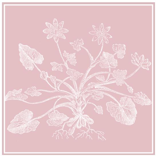 nature vieux rose