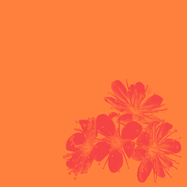 été orange corail