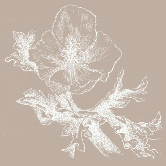 fleur beige blanc
