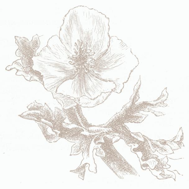fleur blanc beige