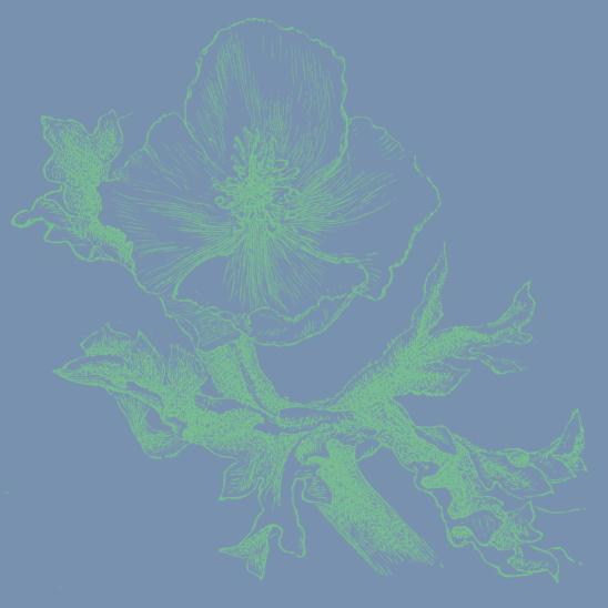fleur bleu vert