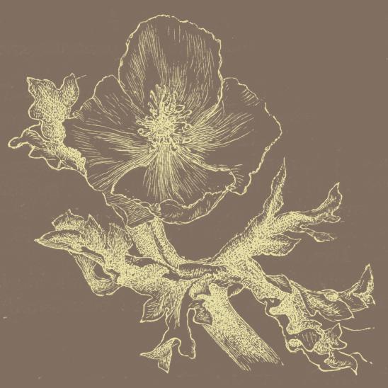 fleur brun jaune