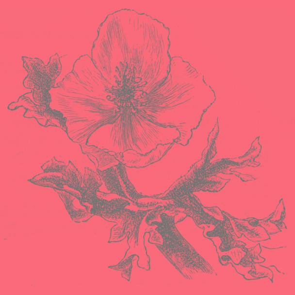 fleur corail gris