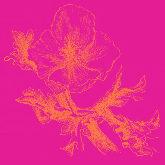 fleur fushia orange