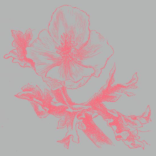 fleur gris corail