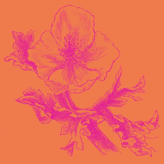 fleur orange fushia