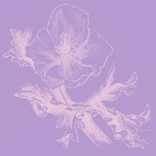 fleur parme rose