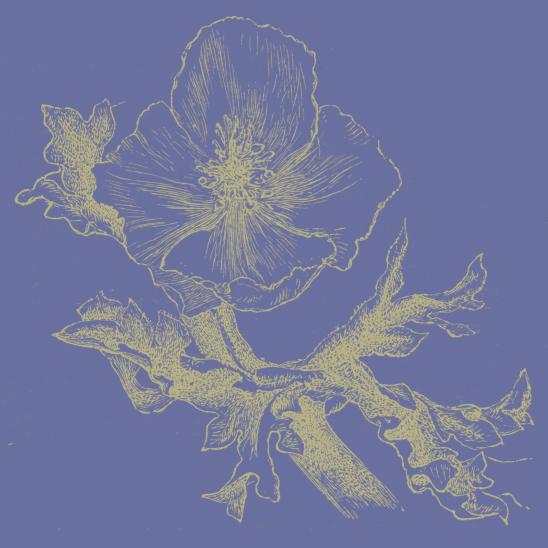 fleur parme vert