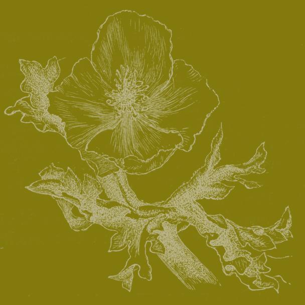 fleur vert vert