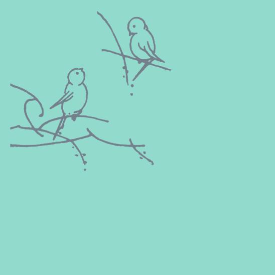 oiseaux gris sur turquoise