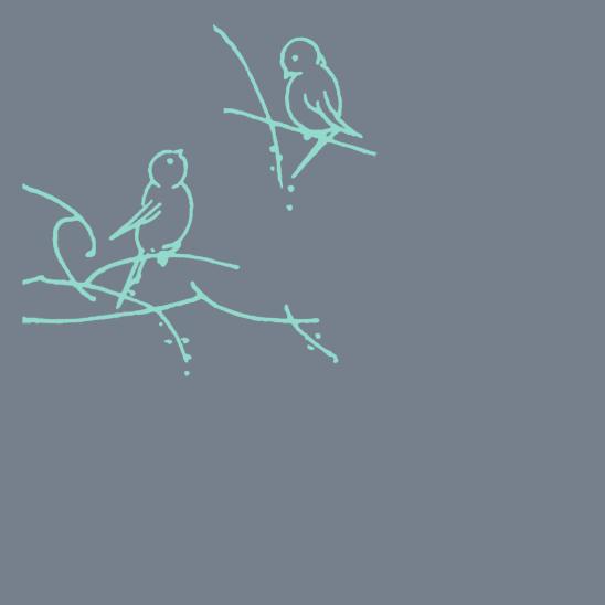 oiseaux turquoise sur gris