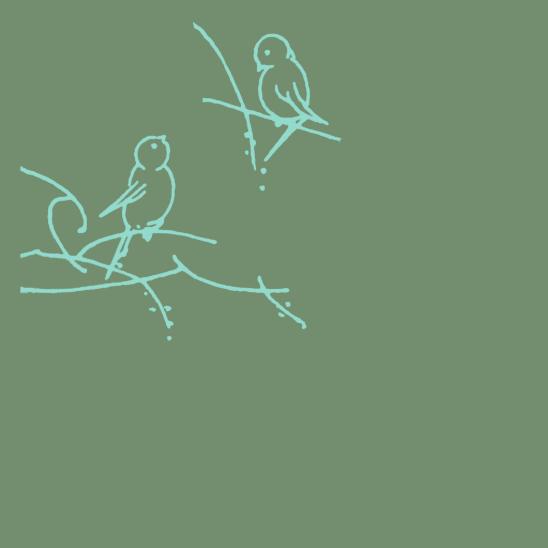 oiseaux turquoise sur vert