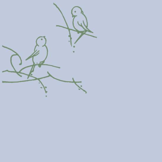 oiseaux verts sur bleus