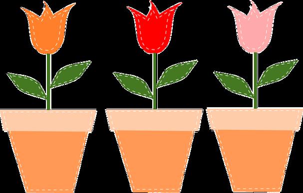 tulips-48265_640