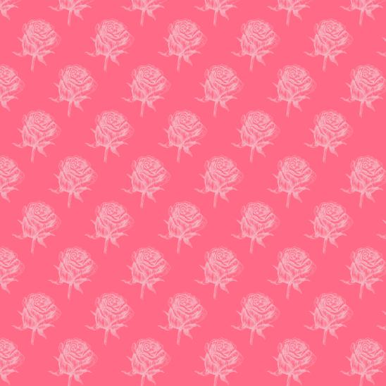 roses roses sur rose fushia